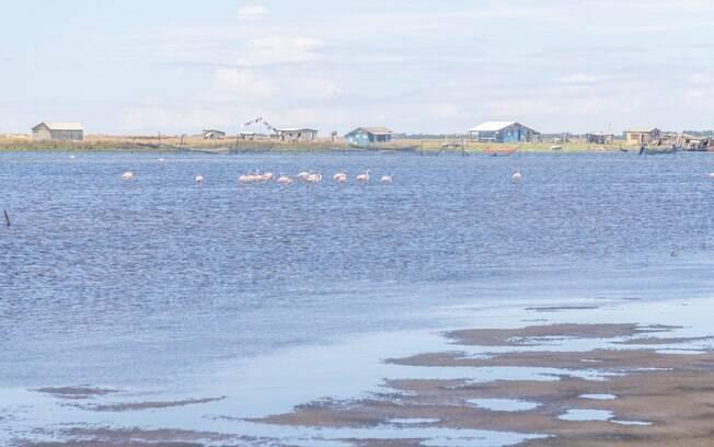A Lagoa do Peixe é um ponto de observação ideal para os aficionados por aves migratórias como o flamingo chileno