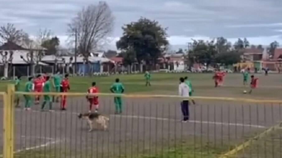 O cachorro estava atento ao lance e entrou para marcar o gol