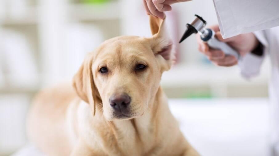 Tratamento para otite canina