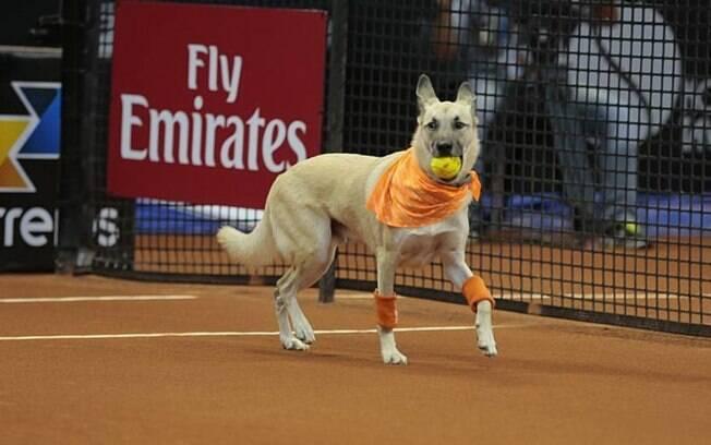Cachorros abandonados serão gandulas em torneio de tênis em São Paulo