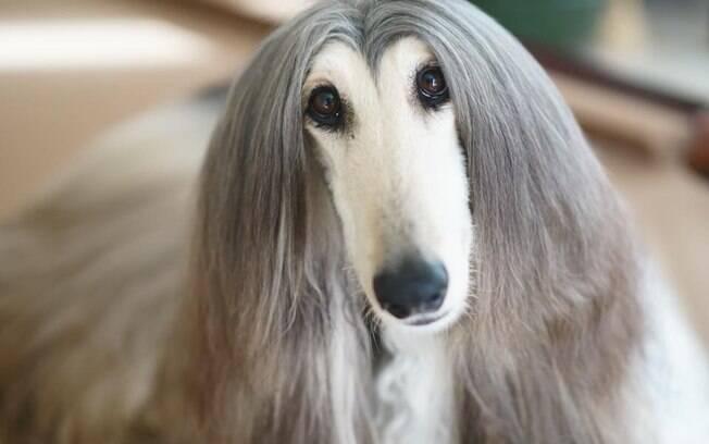 Cão recebe tratamento no pelo diariamente com produtos caros de beleza