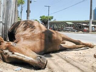 O secretariado de Carlaile queimou muitos neurônios para conseguir retirar, depois de dois dias, o animal morto no Brasileia