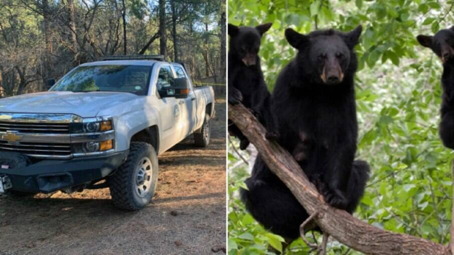 Ursos foram sacrificados no estado de Colorado (EUA) após o incidente