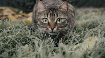 8 segredos dos gatos que você talvez n?o conhe?a