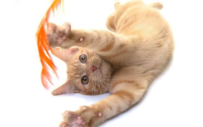 Os gatos precisam ser incentivados a praticar exercícios