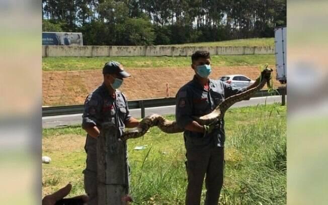 Cobra de 2 metros é capturada às margens da Bandeirantes, em Campinas