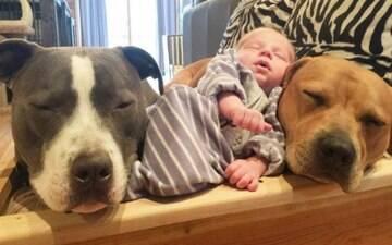 Os 4 cães e o gato dessa família estão fascinados com o irmão recém-nascido