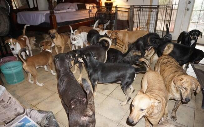 Cães na casa de Chella