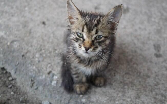 Evite adotar o gato perdido logo de cara, pois os donos podem estar procurando por ele