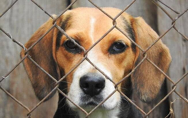 A adoção de cachorros é também sinônimo de salvar vidas