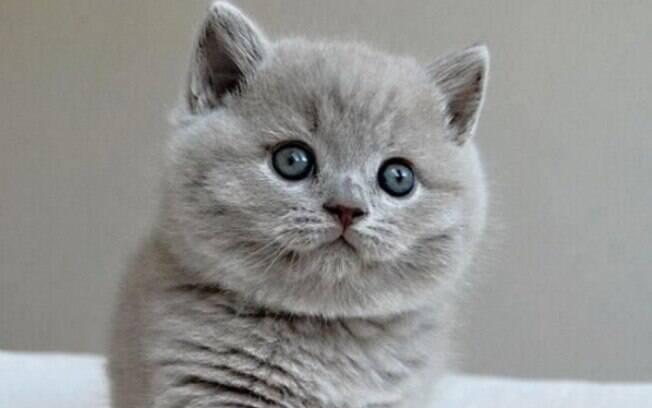 Confira Os 10 Gatos Mais Bonitos Do Mundo, Você Concorda