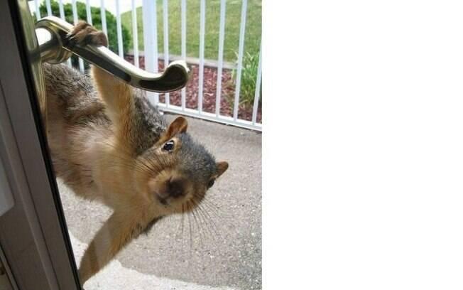 Esses esquilos fofos são lindos, e muito amáveis
