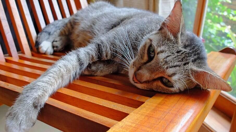 A intoxicação em gatos pode acontecer de diversas maneiras e levar o animal ao óbito