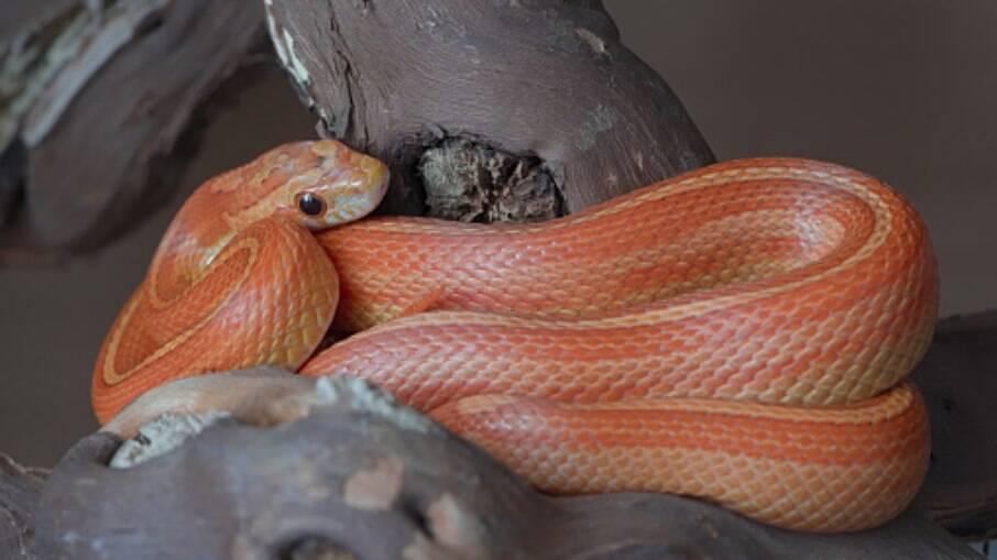 Liz French conseguiu devolver a cobra para o seu vizinho