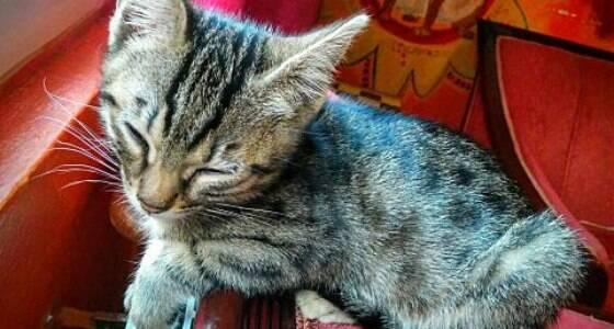 Os lugares no mundo para quem ama gatos
