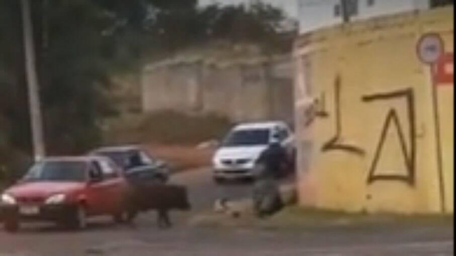 Entregador é derrubado de moto em ataque de javaporco em Franca, no interior paulista