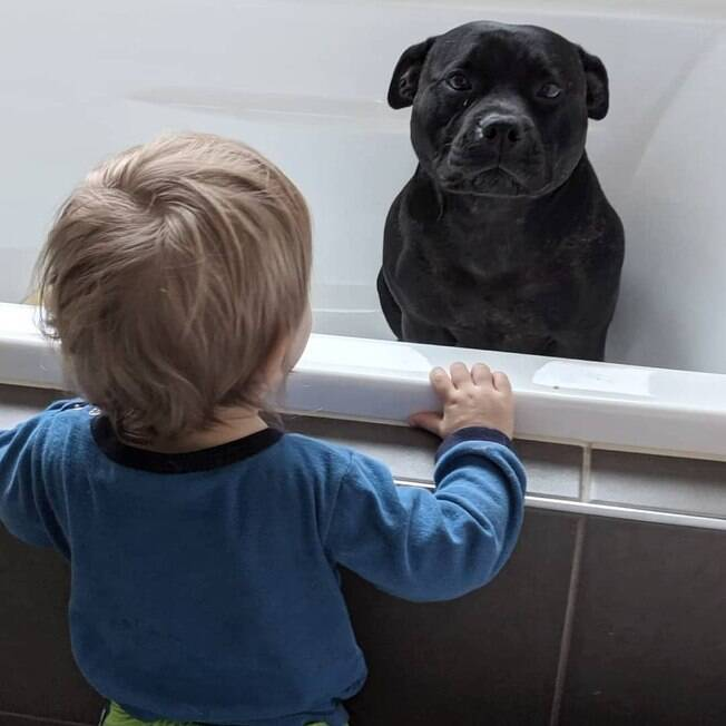 A pitbull Aeida e o filho de seus vizinhos