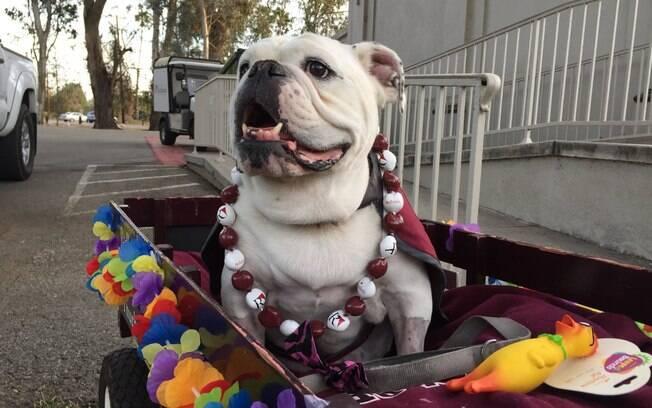 Bulldog ganha cerimônia de despedida em univerdade
