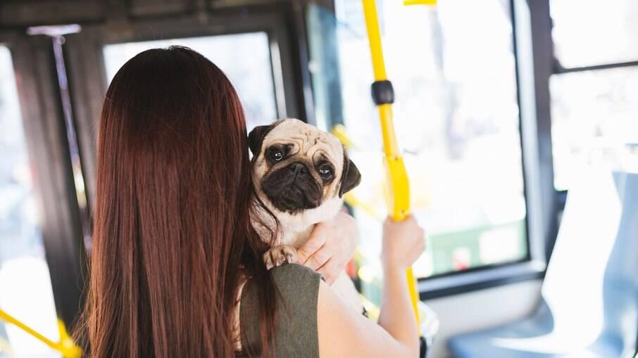 O transporte de animais em metrô, ônibus, trens e VLT possui alta aprovação das pessoas