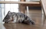 Gato pode comer ou não comida de cachorro?