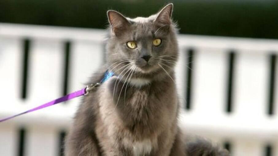 Gatos devem estar acostumados ao uso de coleira antes de sair para o primeiro passeio