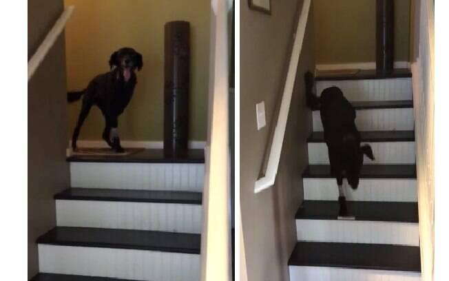 O cachorro teve uma das patas dianteiras amputada e surpreendeu na recuperação