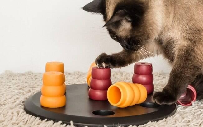Estimular brincadeiras é muito importante para manter os animais ativos