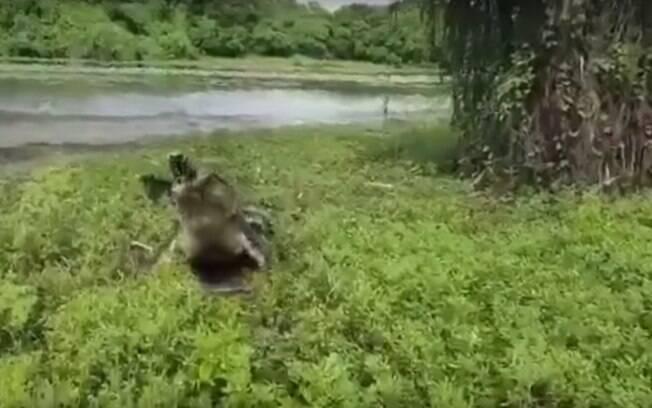 Crocodilo gigante ataca pescadores australianos atrás de captura e vídeo surpreende internautas