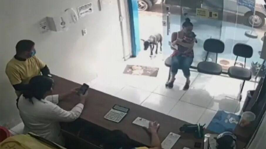 Cachorro machucado entra sozinho em clínica veterinária