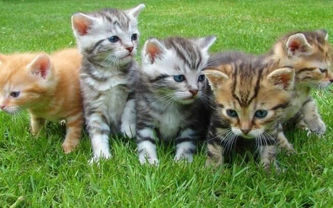 Gatinhos fofos para você amar