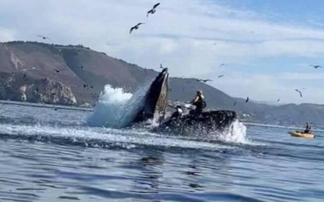 Mulheres em caiaque parecem ser engolidas por baleia na Califórnia