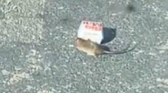 Rato viraliza após carregar caixa do McDonalds pelas ruas