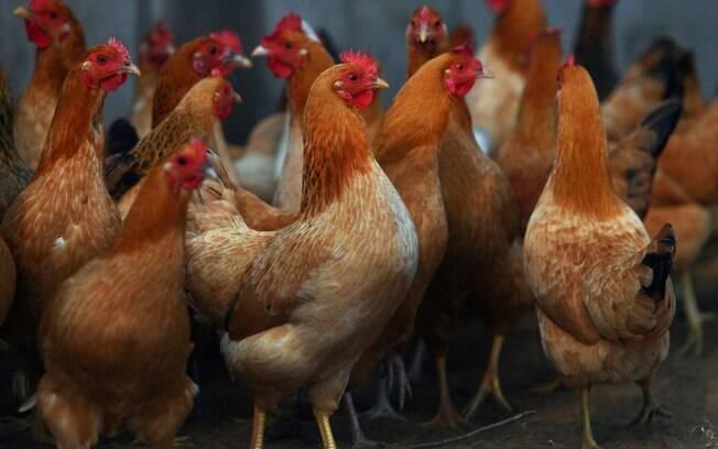 Entre os frigoríficos de carne de frango suspensos pela Arábia Saudita, estão unidades da BRF e JBS