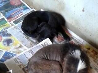Dos 45 animais levados para um dos quatro abrigos, apenas 23 foram encontrados vivos