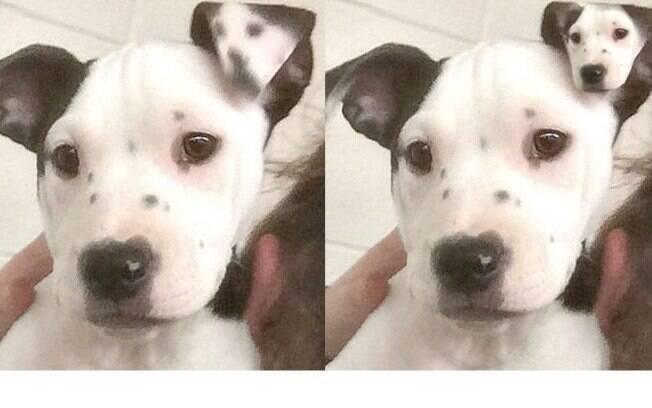 Veja a comparação da orelha original com uma montagem usando a foto de Lucy. São idênticos!