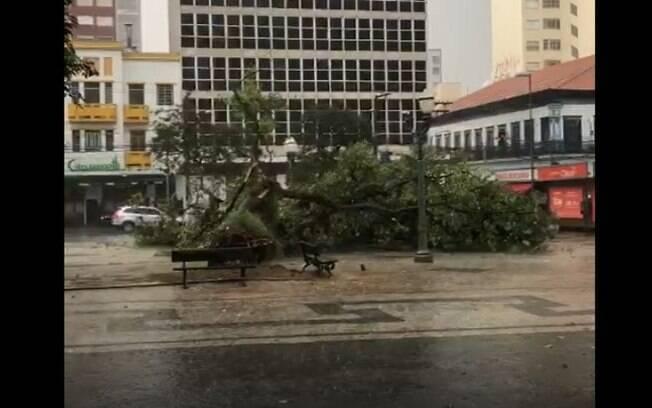Chuva derruba árvore no Centro e causa alagamentos