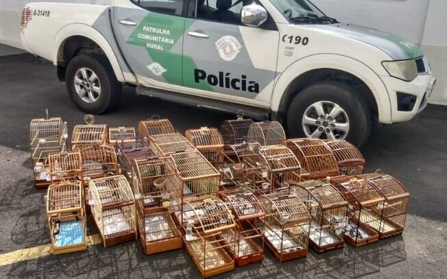 Polícia resgata 25 aves mantidas em cativeiro em Campinas
