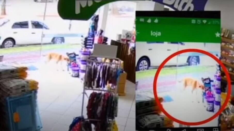 Cachorro leva brinquedo de pet shop em Santa Catarina