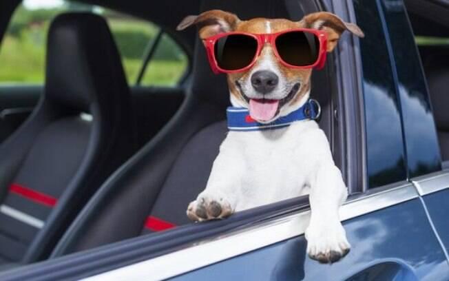 Cinto de segurança para pets: saiba tudo sobre o assunto