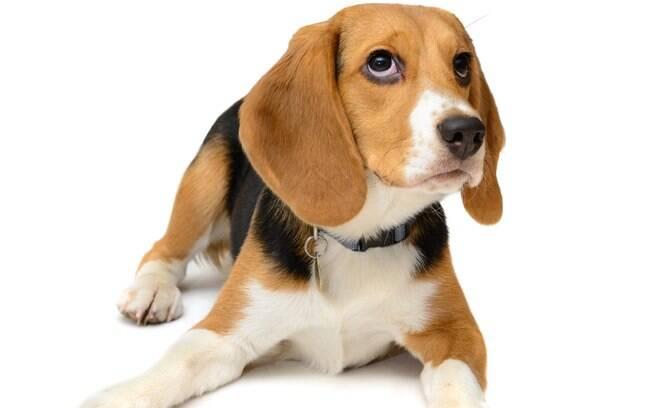 Chamar atenção e ensinar um cachorro pode ser uma tarefa complicada