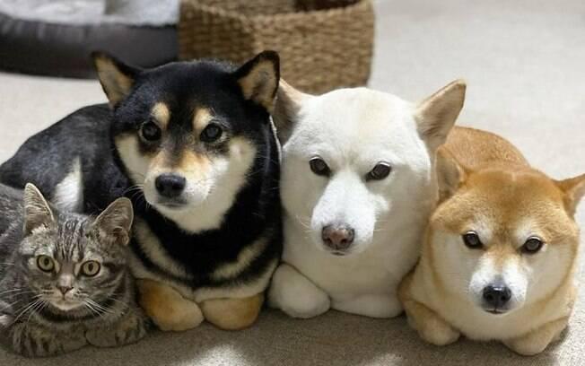 Conheça o gatinho que se comporta como irmãos caninos