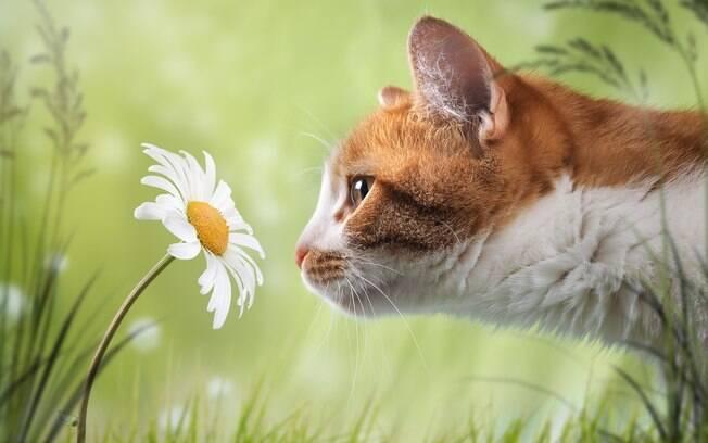 Plantas e flores podem ser tóxicas ao pet