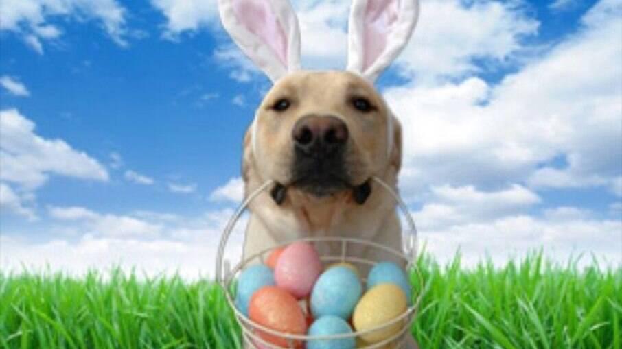 Nessa páscoa pense duas vezes antes de dar chocolate para animais