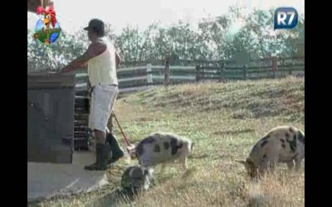 Compadre fala com os porcos