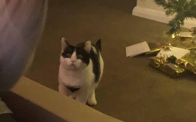 Cara de gato ao perceber alguém que não era ele dentro de caixa