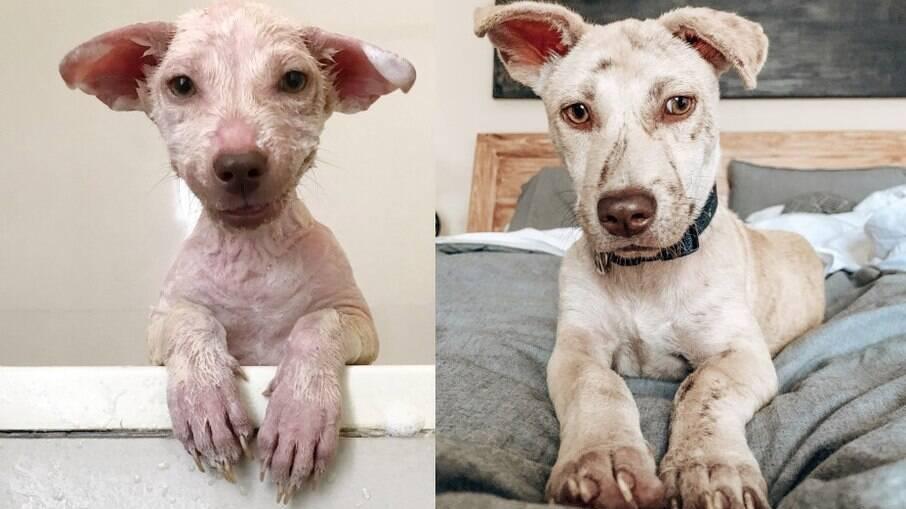Cão abandonado apavorado aprende a confiar nos humanos novamente após ser resgatado na beira da estrada
