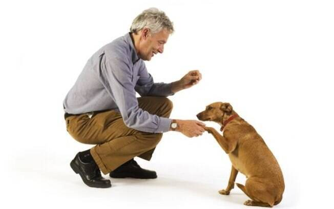 Adestrar o cachorro para dar a pata é uma tarefa fácil, só precisa de paciência e comprometimento