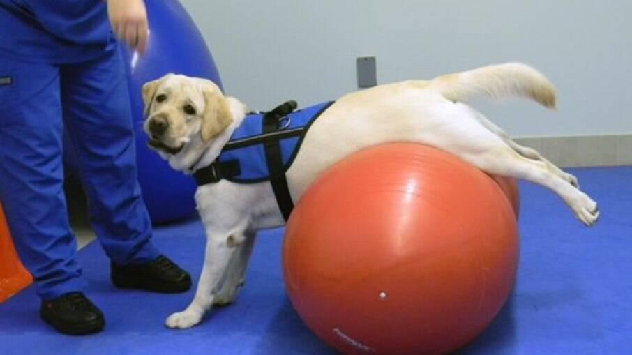 Cinesioterapia utiliza bolas e outros acessórios para a realização de exercícios