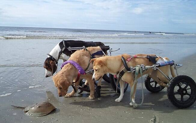 Dia do Amigo: esses cães comemorando a amizade é demais