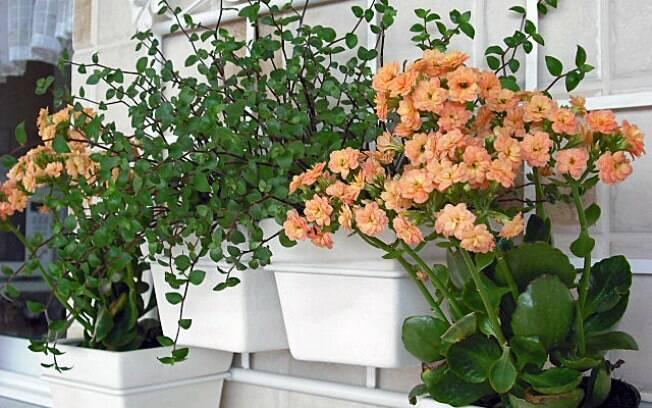 Plantar em terra adubada e escolher flores de características semelhantes são fundamentos básicos para compor  a floreira